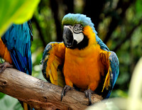 A Baby Blue and Yellow Macaw
